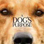 Quatro Vidas de um Cachorro (2017)